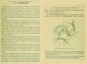 Chaetospermum
