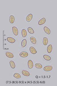 Cortinarius vibratilis