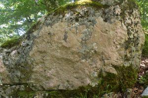 Gyalecta leucaspis